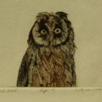 Bruchers owl