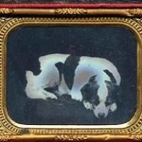 4 - Ambrotype of dog