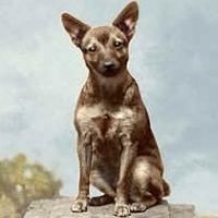 19 - Portrait of the dog, Brooklyn