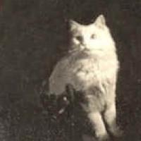 8 - Cat in oval frame
