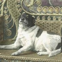 30 - Postcard of Frisk, a dog