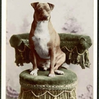 20 - Portrait of dog on  chair