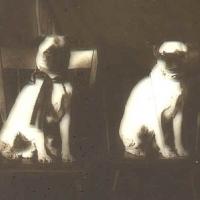 5 - Hyalotype of dog