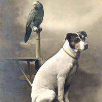 22 - Portrait of dog and parrot