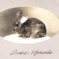 21 - Dixie, the rabbit wearing white bow