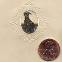 7 - Penny size tintype of dog