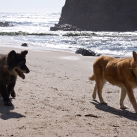 f-fox-and-bear-beach-outing-in-foster-care