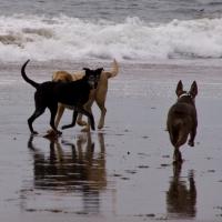 m-zippy-meeting-new-friend-at-the-beach