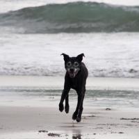 n-zippy-beach1