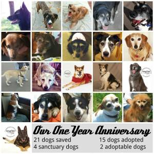One year anniversary poster