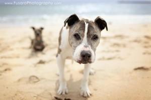 Sunny on beach