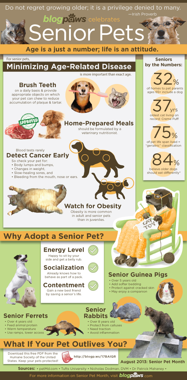 blogpaws infographic