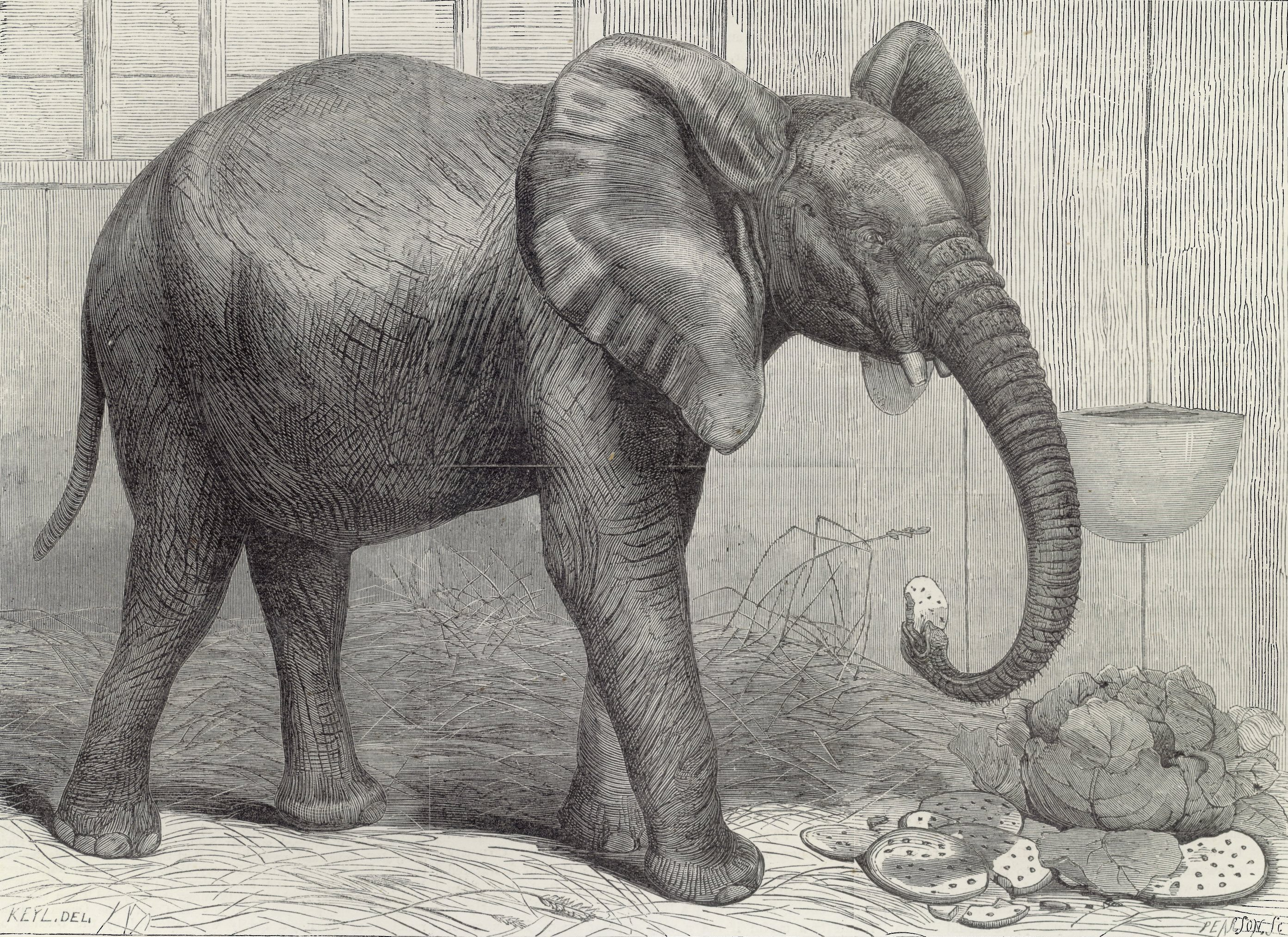 what does the elephant symbolize in shooting an elephant