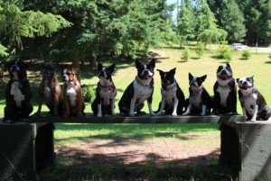 Canadian banner - Cindy's pack and friends - from Cindy Cruise Caspersen via FB on 10-05-2012